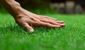 Healthier Lawn in 3 Steps