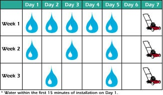 Watering Schedule After Sodding